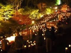 【 入選 】 「光の森」